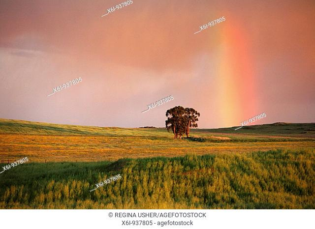 Rainbow at twilight, NP Herdade de Sao Marcos Great Bustard Reserve, beside Castro Verde, Alentejo, Portugal