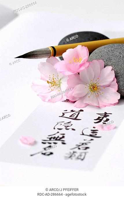 Japanese Cherry, brush and Japanese letters / Prunus sargentii / calligraphy