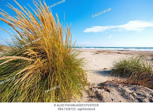 Italy, Veneto, Porto Caleri, wild beach