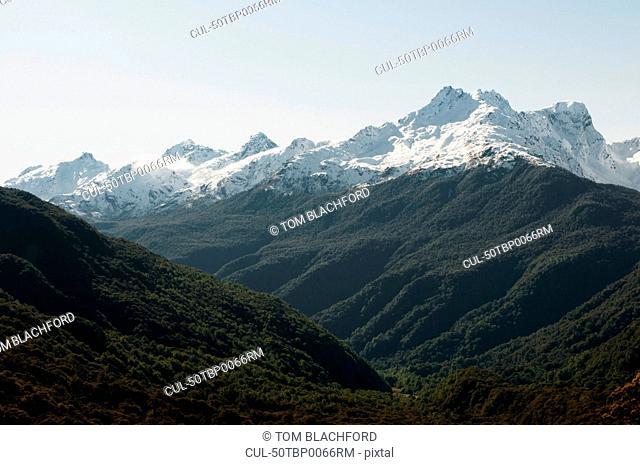 Forests on snowy mountains
