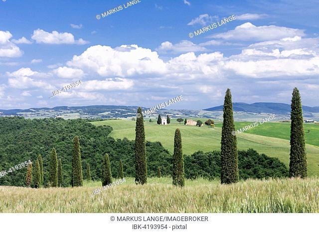 Cypress trees and Capella di Vitaleta, Val d'Orcia, Tuscany, Province of Siena, Italy