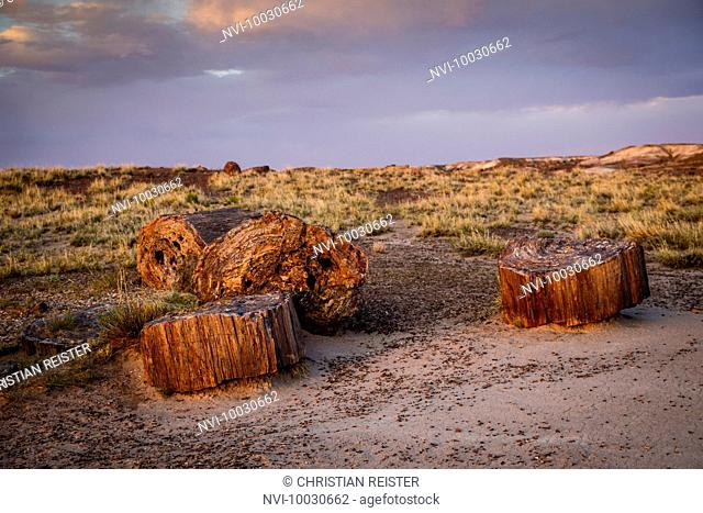 Petrified Forest Nationalpark, Historic Route 66, Arizona, USA