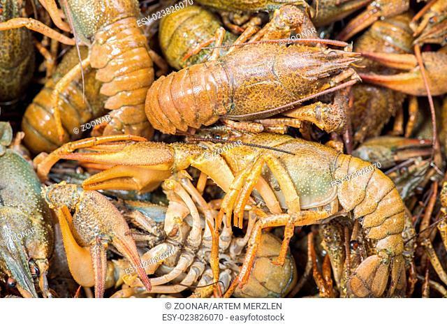 Many live crayfish on kitchen