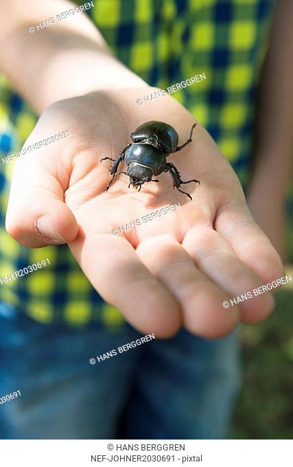 Beetle on childs hand