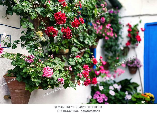 Typical andalusian courtyard in Cordoba, Andalusia Spain with a lot of plants