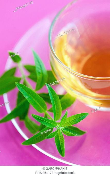 Verbeena herbal tea