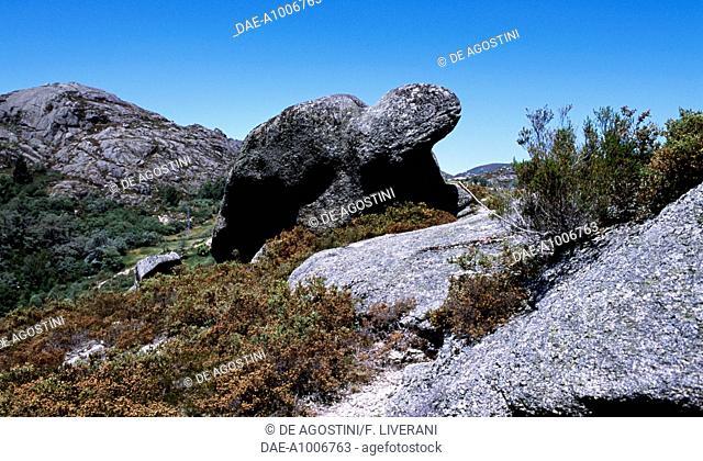 Granite rock in the shape of a turtle in the surroundings of Castro Laboreiro, Peneda-Geres National Park (Parque Nacional da Peneda-Geres), Portugal