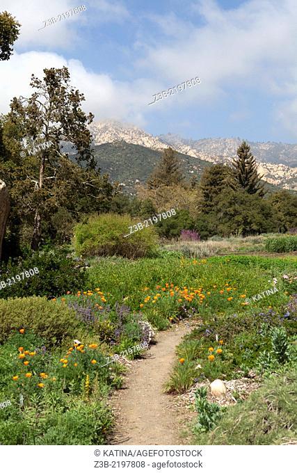 Flowers in bloom and view of mountains at the Santa Barbara Botanic Garden, Santa Barbara, CA, USA