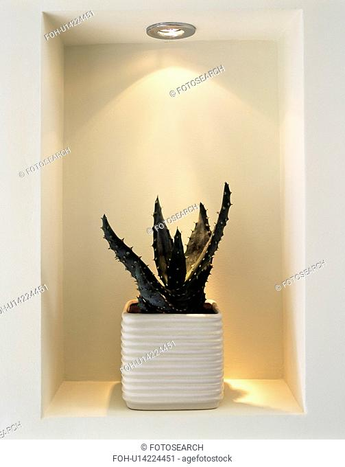 Close up of downlighter on cactus in square white pot in modern alcove shelving