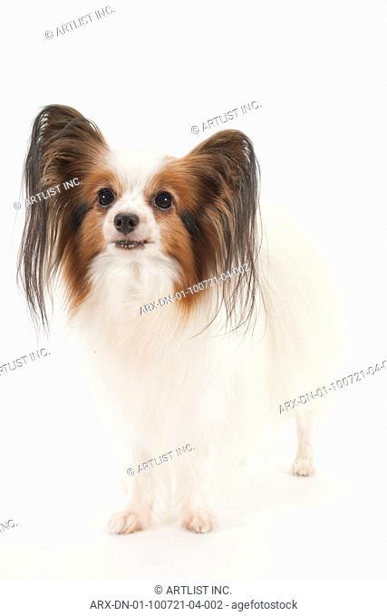 A dog standing still