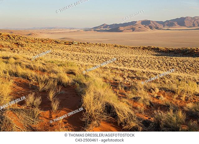 Evening landscape with bushman grass (Stipagrostis sp. ) at the edge of the Namib Desert in the area of the exclusive Wolwedans safari camps