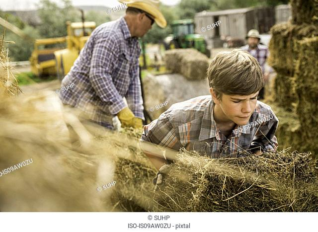 Mature men and boy on farm moving hay bales