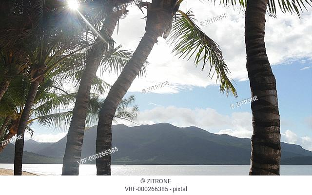 Scenic view of mountain seen through tree trunks on sunny day, Mauritius