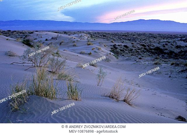 Sand dunes of Karakum desert - sunset . Kopetdag mountains on background - Turkmenistan - former CIS - Spring - April