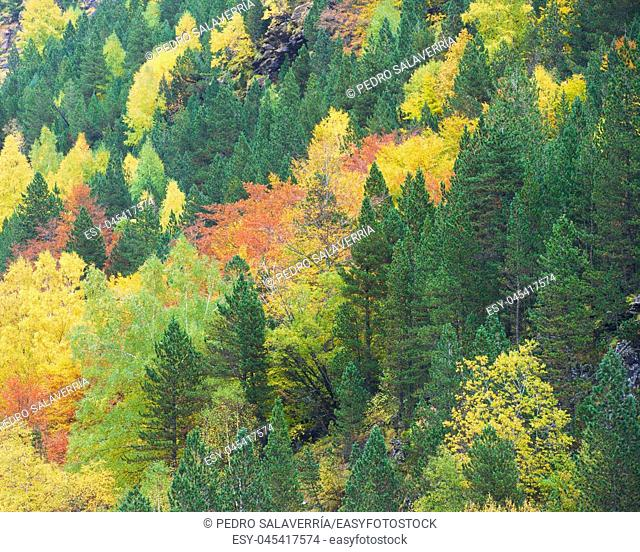 Autumn in Ordesa National Park, Pyrenees, Huesca, Aragon, Spain
