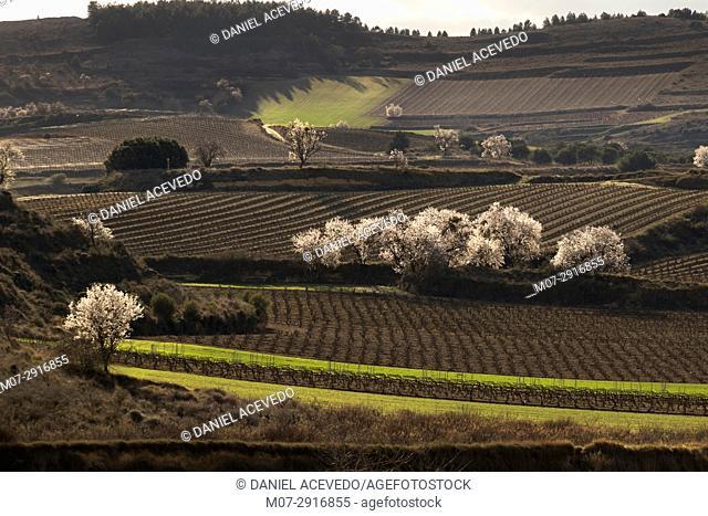 San Asensio wine scape in spring time, La Rioja wine region, Spain, Europe