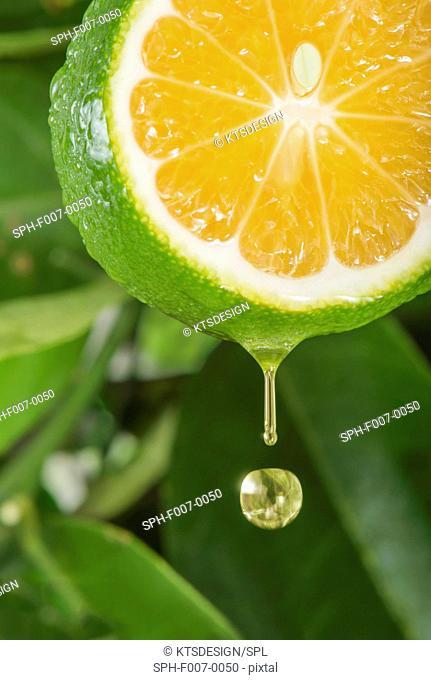 Lemon slice, composite image