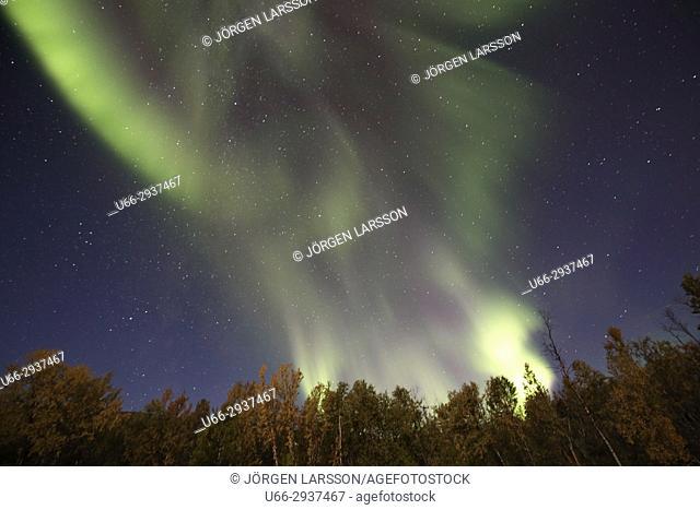 Aurora borealis Autumn colours in Bjorkliden. Lappland, Sweden
