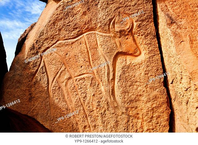 Ancient engraving of a buffalo at the Wadi Matkhandouch, Libya
