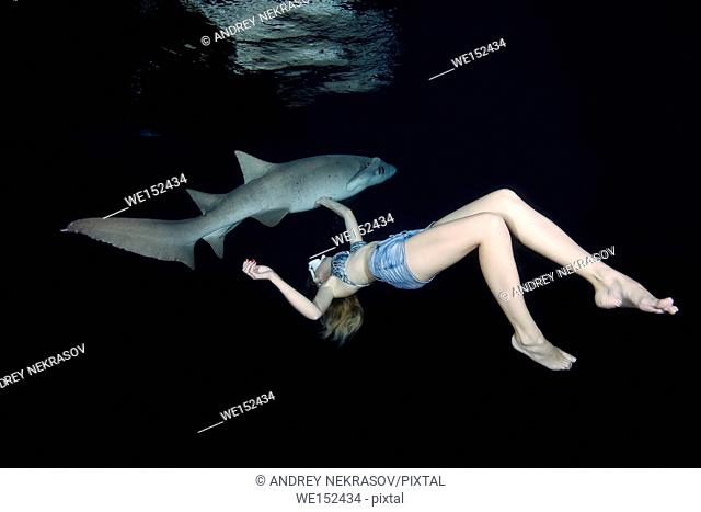 Young beautiful woman swims at night with a shark - Tawny nurse sharks (Nebrius ferrugineus), Indian Ocean, Maldives