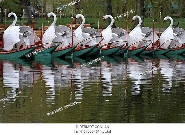 Massachusetts, Boston, Swan boats in Boston Public Garden