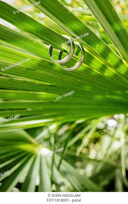 Wedding rings on green fern leaf
