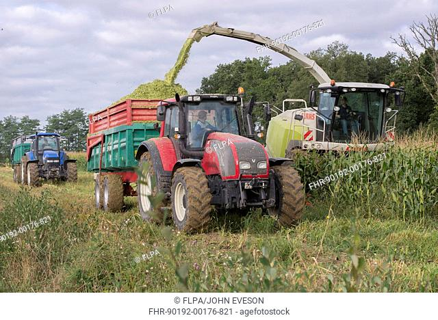 Maize (Zea mays) crop, Claas forage harvester harvesting field, loading tractor and trailer, Luze, Richelieu, Indre-et-Loire, Central France, September