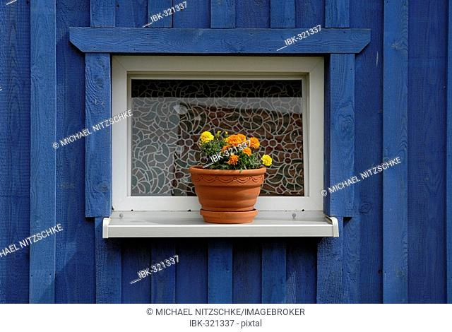 Flowerpot in front of blue house, Putbus, Ruegen, Germany