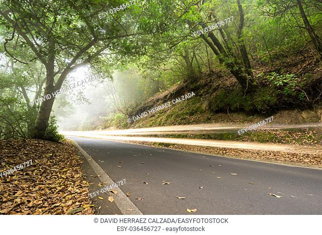 Car light trails in the foggy forest, Anaga, tenerife, Canary island, Spain