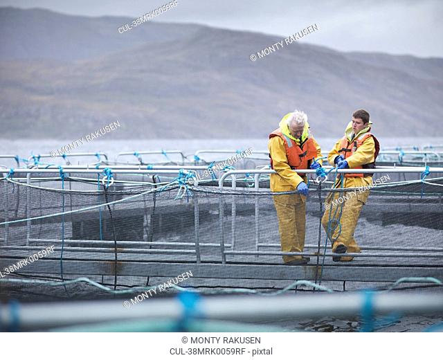 Workers pulling in net at fish farm