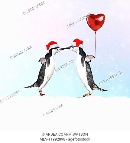Chinstrap Penguin, pair wearing Christmas hats kissing, one holding heart shaped balloon
