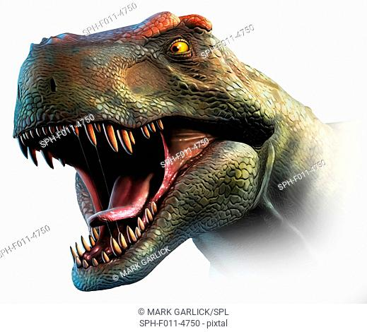 Tyrannosaurus rex, head study. This dinosaur lived in North America and Asia from about 70 million years ago until the extinction of the dinosaurs some 5...