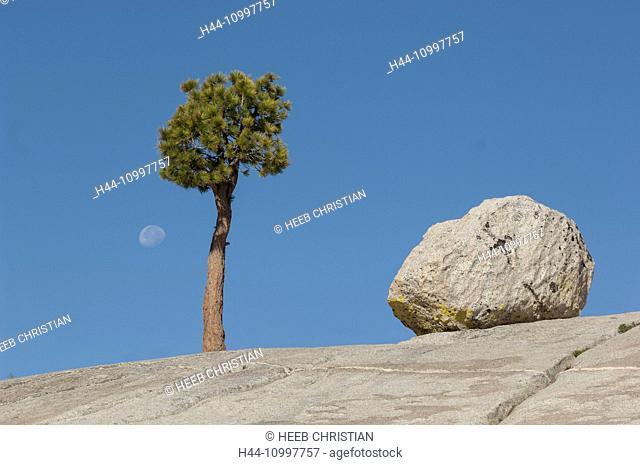 USA, California, Sierra Nevada, Yosemite, National Park, Tioga pass, tree on granite dome