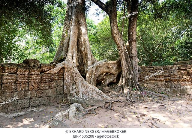 Tree roots in the temple of Ta Prohm, Angkor Thom, Cambodia