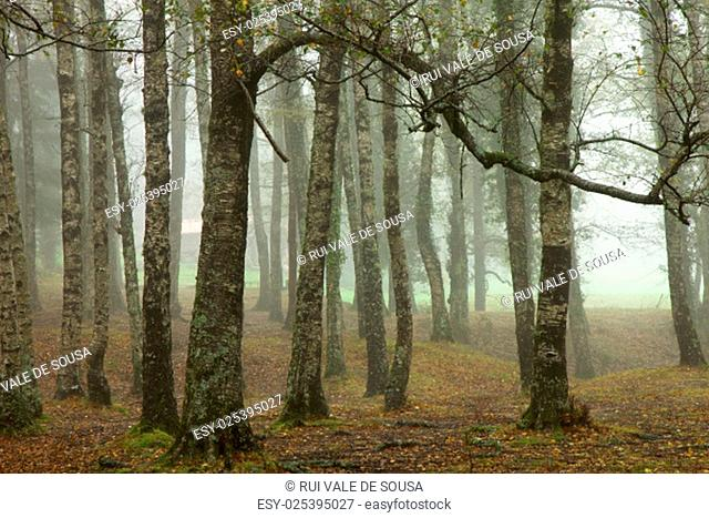 forest fog in the portuguese national park