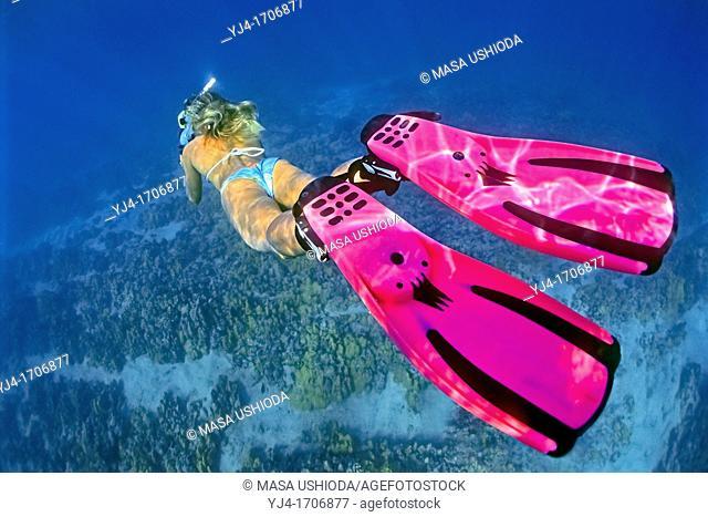 woman snorkeler, diving over coral reef, Kiholo Bay, Kohala Coast, Big Island, Hawaii, USA, Pacific Ocean