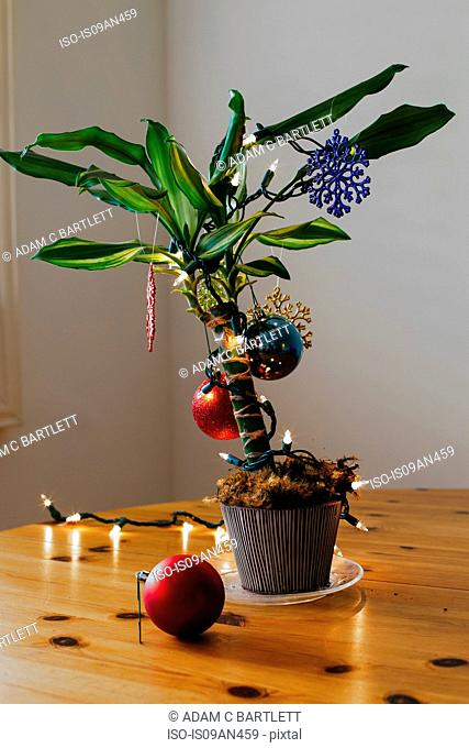 House plant decorated for Christmas
