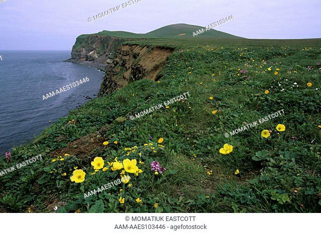 Bering Sea Cliffs, Summer flowers on top, St. Paul Island, Pribilofs, Alaska