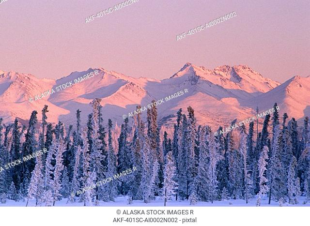 Snow Covered Trees Winter Chugach Mts AK