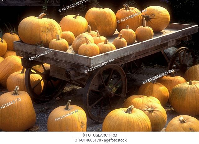 pumpkins, harvest, display, autumn, A bunch of pumpkins for sale at a Morse Farm Country Store displayed on and next to a wagon in East Montpelier in Washington...
