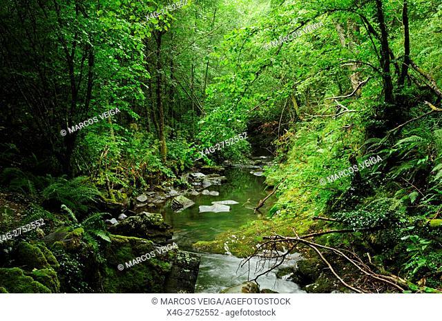 Deciduous forest. O Caurel, Galicia, Spain