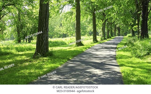 A walking path in summer, Pennsylvania, USA