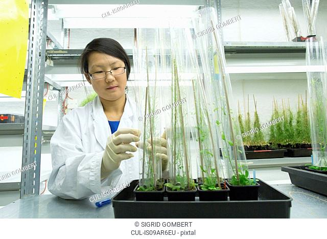 Female scientist looking at plant sample in greenhouse lab