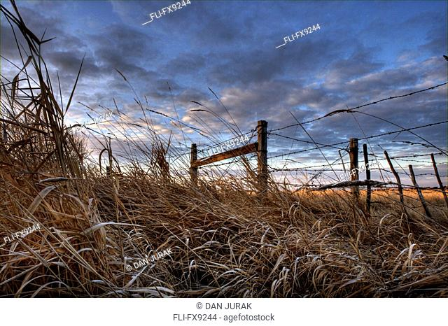 Frosty Sedges and Reeds Beneath a Barbed Wire Fence, Alberta