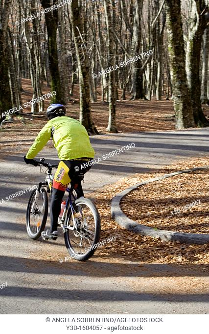 Cyclist in a beech trees forest, Italy