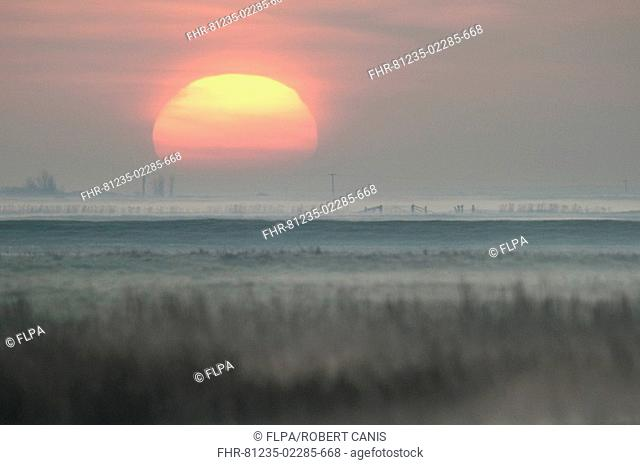 View of coastal grazing marsh with frost and mist at sunrise, Elmley Marshes N N R , Isle of Sheppey, Kent, England, spring
