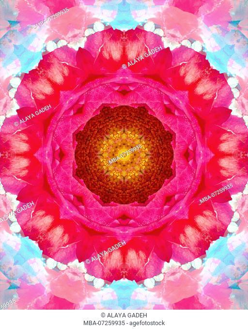 Photographic flower mandala, yellow, red, pink