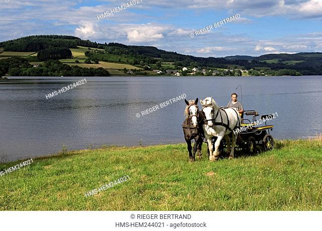 France, Nievre, Panneciere Lake, Alain Perruchot farmer and horse breeder in command of its coupling