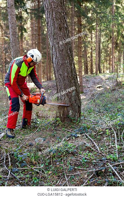 Cutting tree with chainsaw