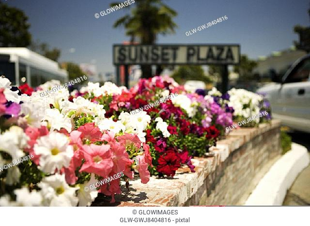 Sunset Plaza Sign erected in a flower bed, Los Angeles, California, USA